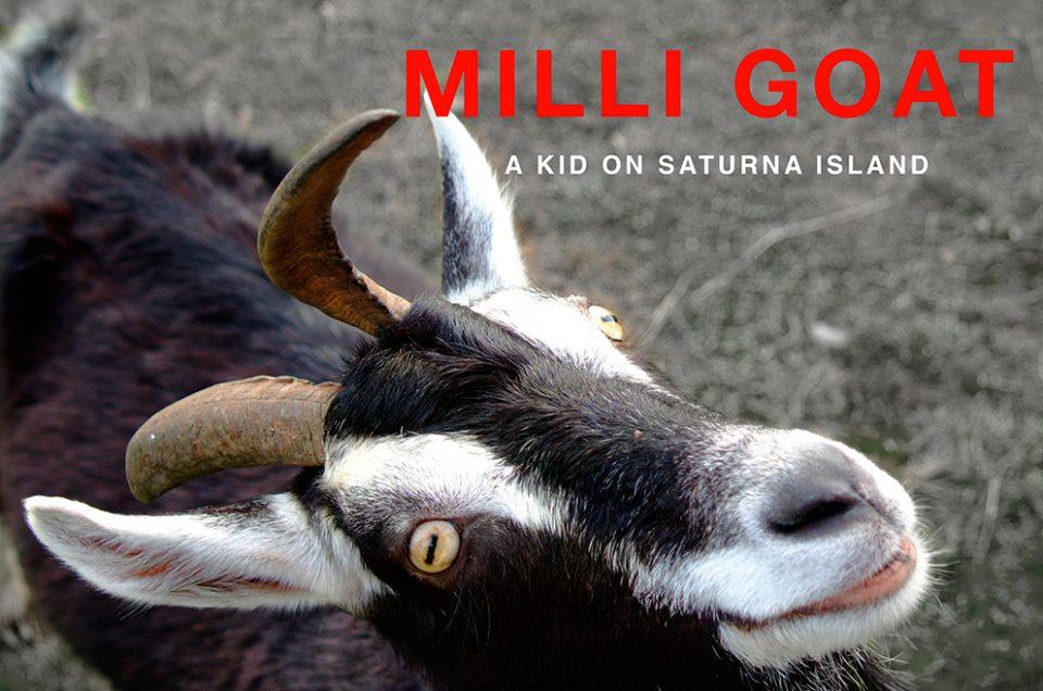 Milli Goat a Kid on Saturna